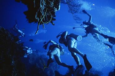 Underwater view of scuba divers