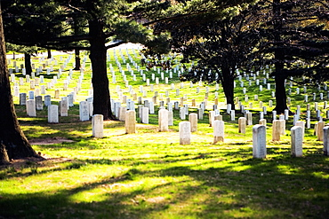 Gravestones in a graveyard, Arlington National Cemetery, Arlington, Virginia, USA