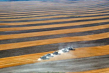 Aerial view of custom harvest combines harvesting wheat, with strips of field and five combines in a role, WY