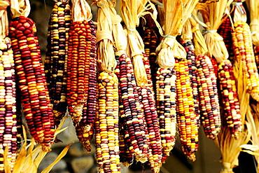 Closeup of colorful Indian corn in shop in Cherokee, North Carolina