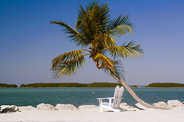 Two empty adirondack chairs and a palm tree on the beach