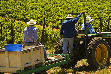 Rear view of three farmers on a tractor