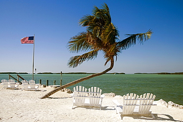 Empty adirondack chairs and a palm tree on the beach