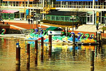 Dragon boats docked at a harbor, Inner Harbor, Baltimore, Maryland, USA