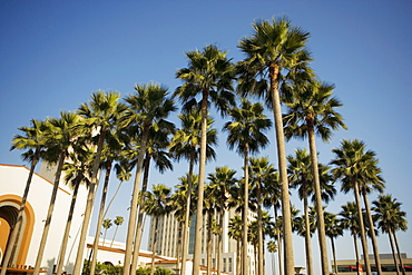 Palm trees in front of a station, Union Station, Los Angeles, California, USA