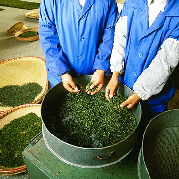 Mid section view of two men working in a tea factory, Yixing, Jiangsu Province, China