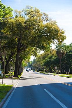 Trees along a road, Orlando, Florida, USA