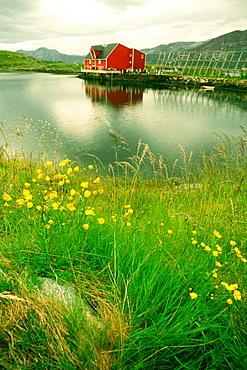 Fish farm on an island, Salmon, Norway