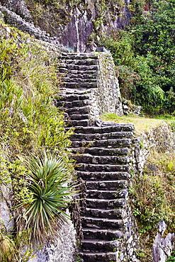 High angle view of ruined steps, Aguas Calientes, Mt Huayna Picchu, Machu Picchu, Cusco Region, Peru