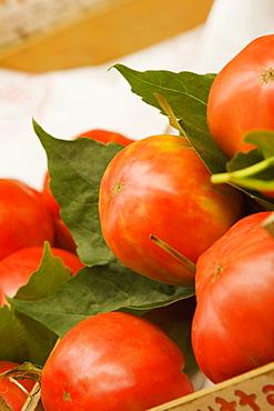Close-up of tomatoes, Sorrento, Sorrentine Peninsula, Naples Province, Campania, Italy