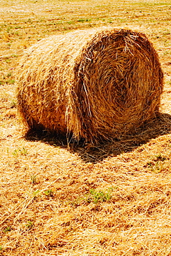Hay bale in a field, Siena Province, Tuscany, Italy