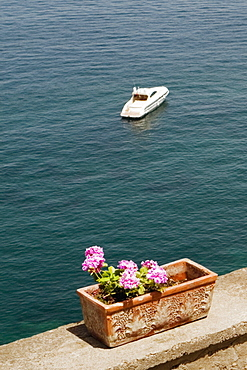 Potted plant at seaside with a tourboat in the background, Bay of Naples, Sorrento, Sorrentine Peninsula, Naples Province, Campania, Italy