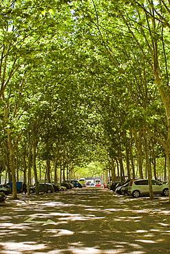Vehicles parked on the both sides of a road, Place des Quinconces, Bordeaux, France