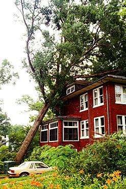Fallen tree on a house, Washington DC, USA