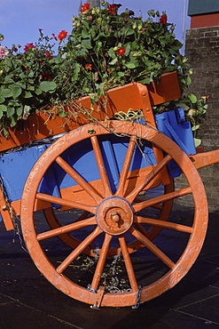 Plants in a flower wagon, Clones County Monaghan, Republic of Ireland