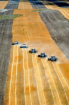 Aerial view of custom harvest combines harvesting wheat with five combines in a role