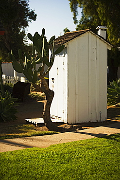Cactus plant growing beside an outhouse, San Diego, California, USA