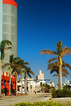 Palm trees on the both sides of a street, Miami, Florida, USA