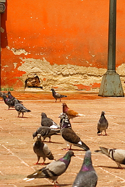 Group of pigeons near a pole, Mexico