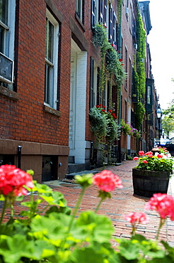 Flowering plants in front of a building, Boston, Massachusetts, USA