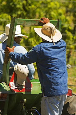 Rear view of two farmers on a tractor