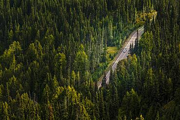 Aerial view of a dirt road through a thick forest in Olympic National Park.