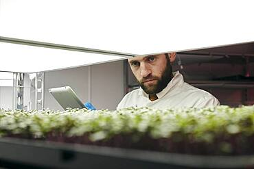 Man using tablet to check microgreens in urban farm
