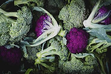 High angle close up of freshly picked green and purple broccoli.