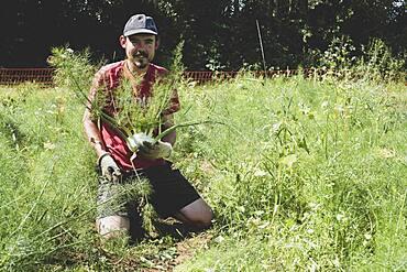 Farmer kneeling in a field holding freshly picked fennel.