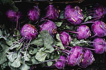 High angle close up of freshly picked purple kohlrabi.