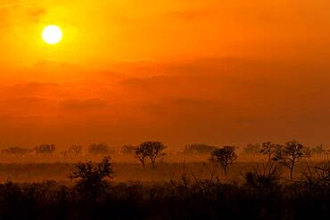 A sunrise over the game reserve, tree silhouettes in foreground, Sabi Sands, South Africa