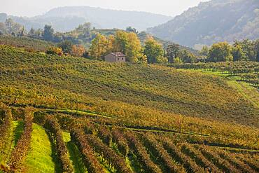 Countryside and vineyards near the village of Rolle in the Treviso district, Veneto, Italy