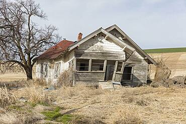Abandoned homestead in a rural landscape, falling down