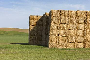 Large stack of hay bales in farmland