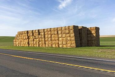 Large stack of hay bales in a field by a road