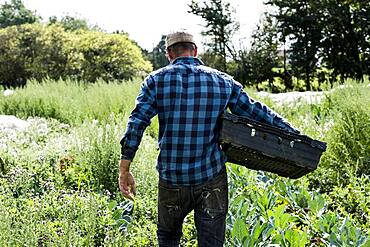 Farmer in a field carrying black plastic crate.