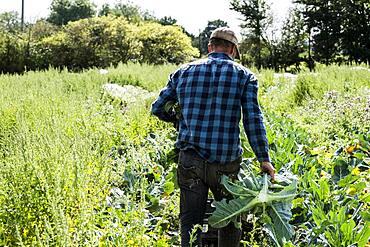 Farmer walking through a field of crops