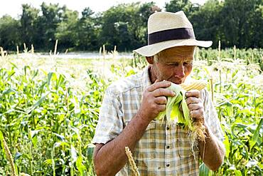 Farmer standing in a field, eating freshly picked sweetcorn.