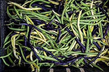 Freshly picked green, yellow and purple beans.