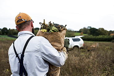 Farmer walking in a field, carrying paper bag with freshly picked gourds.