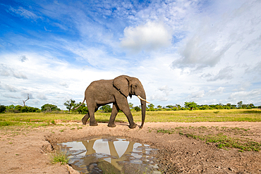 An elephant, Loxodonta africana, reflection in water, white clouds background, Londolozi Game Reserve, South Africa