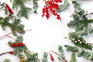 Green foliage, eucalyptus and red berries on white background, Christmas decorations.