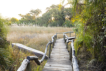 Wooden walkway at a safari camp in the Okavango Delta, Botswana.