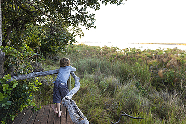 A young boy on a walkway looking out from a camp tent in the Okavango Delta