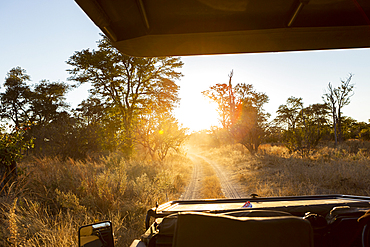 Safari vehicle at sunrise, Okavango Delta, Botswana.