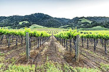 Vineyards in rural Sonoma.