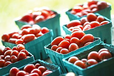 Organic red cherry tomatoes in boxes on a market stall, Woodstock, New York, USA