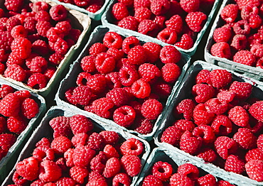 Boxes of organic raspberries on a farmers market stall, Seattle, Washington, USA