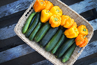 Organic Zucchini in basket with Yellow and Orange Bell Peppers, Woodstock, New York, USA