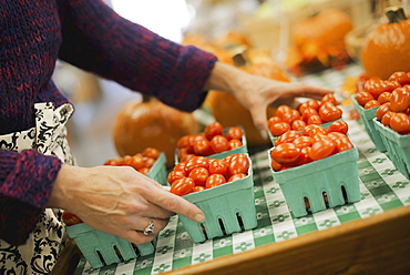 Organic Farmer at Work. A young man arranging a row of punnets of tomatoes, Accord, New York, USA